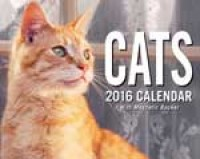 2016 Cats Mini Pad Boxed Calendar